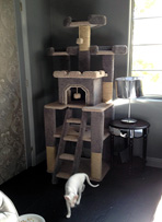Quality Cat Condo to great Home